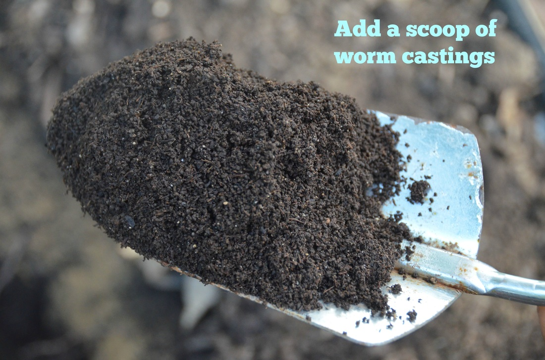 worm casting