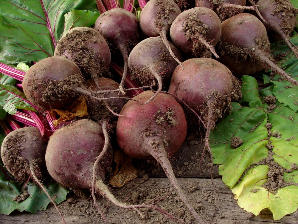 Freshly picked beets