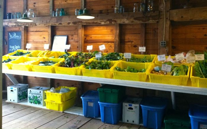 fresh bins of produce from a CSA share