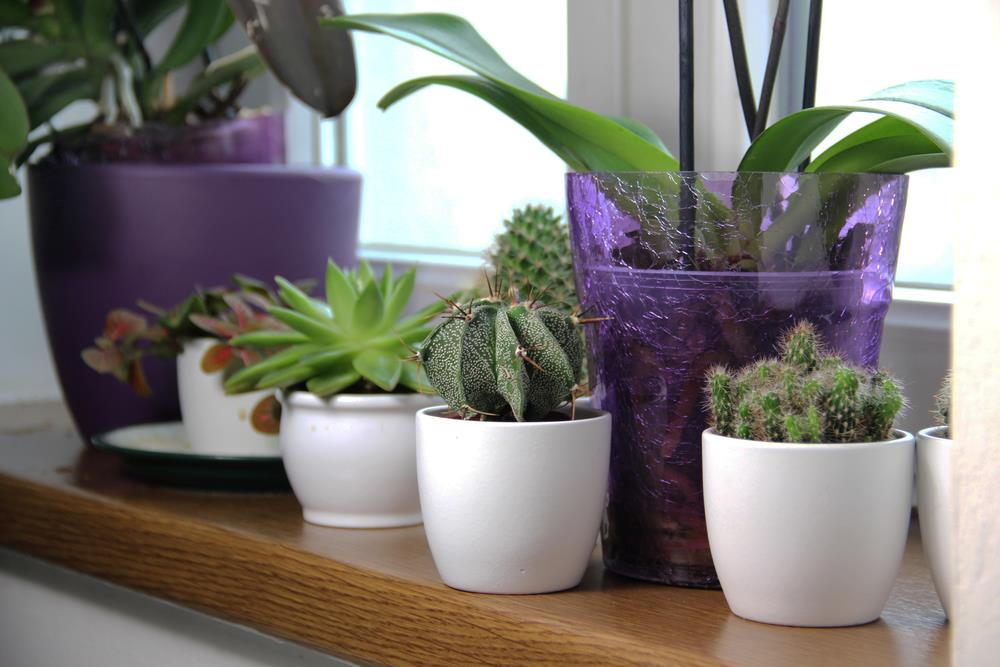Orchids and cacti happily growing on a windowsill.
