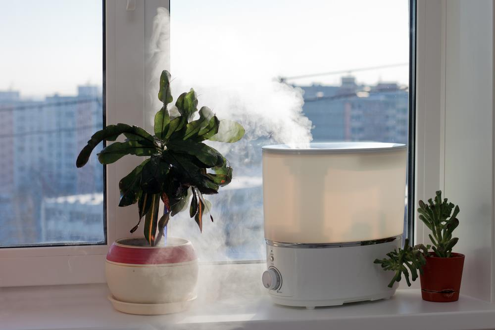 Houseplants enjoying a humidifier!