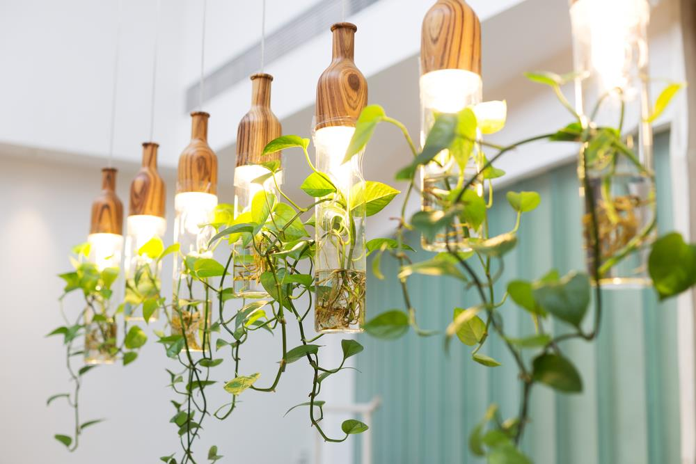 Plants growing hydroponically using bright indoor track lighting.