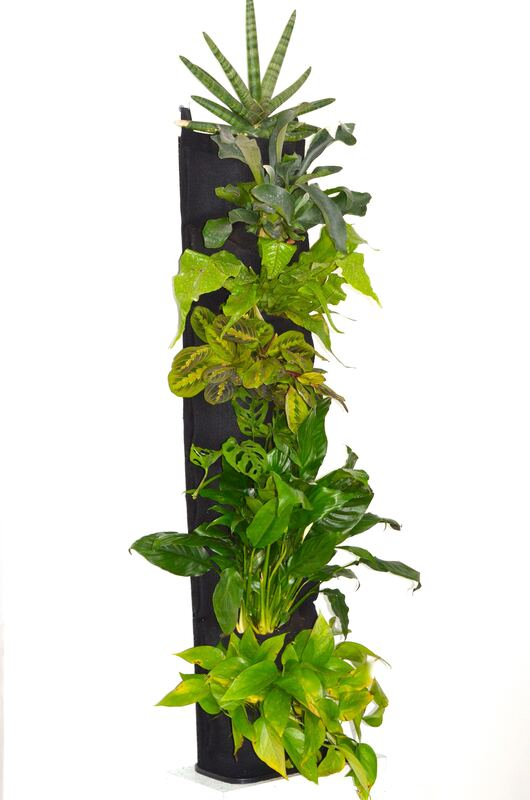 Starfish snake plant, staghorn fern, crocodile fern, red prayer plant, Swiss cheese vine, peace lily plant, jade pothos plantPicture